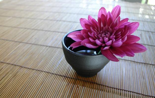 chrysanthemum-757439_1920